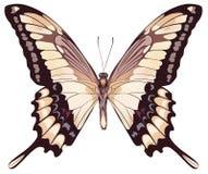 motyl odizolowywający światło Obraz Stock