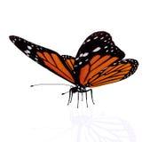 Motyl odizolowywający na biel Zdjęcia Royalty Free