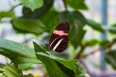 motyl ogrodowy s południowy Thailand Zdjęcia Royalty Free