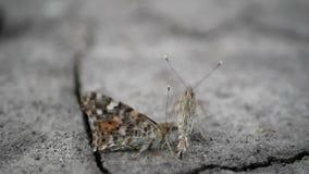 Motyl przeżyje suszę, zmiana klimatu globalne ocieplenie zbiory wideo