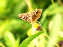 Motyl przeciw lekkiemu tłu Zdjęcia Stock