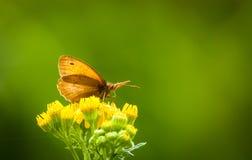 Motyl przy odpoczynkiem Zdjęcia Royalty Free