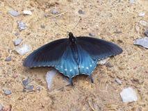 Motyl przy odpoczynkiem Fotografia Stock