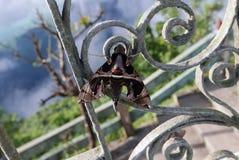 Motyl przy odpoczynkiem Obrazy Royalty Free