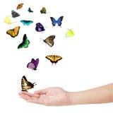 motyl ręka Fotografia Royalty Free