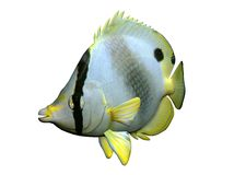 Motyl ryba Obrazy Stock