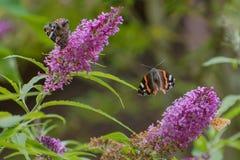 Motyl siedzi na bzie zdjęcia stock