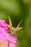Motyl siedzi na kwiacie Fotografia Stock