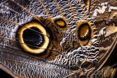 Motyl skrzydłowa tekstura, zamyka up szczegół motyla skrzydło dla tła obraz stock