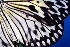 Motyl skrzydłowa tekstura, zamyka up szczegół motyla skrzydło dla tła obrazy stock