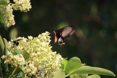 Motyl, szerszeń, pollen Fotografia Stock