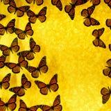 motyl tło Fotografia Stock