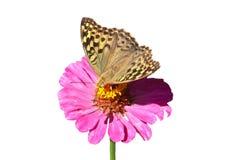 motyl tropikalny Fotografia Royalty Free