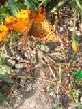 Motyl uczy my lekcję miłość Zdjęcie Royalty Free