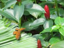 Motyl umieszczający na liściu Obrazy Stock