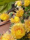Motyl wśród małych kwiatów fotografia stock