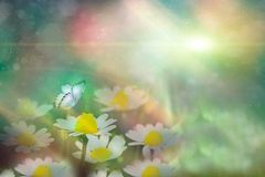 Motyl w chamomile na łące przy nocą w olśniewającym blask księżyca na naturze w błękicie i purpurowych brzmieniach makro-, bajecz zdjęcie royalty free