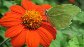 Motyl w kwiacie Zdjęcia Stock