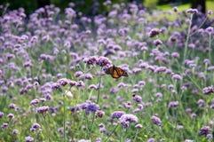 Motyl w kwiat łące Obraz Royalty Free