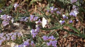 Motyl w kwiatach zdjęcie stock