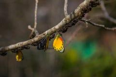 Motyl w naturze na drzewie fotografia stock