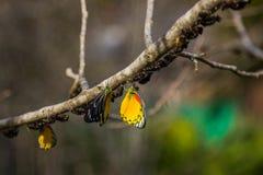 Motyl w naturze na drzewie obraz royalty free