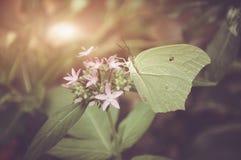 Motyl w naturze Płytka głębia pole z instgram o temacie Obrazy Stock
