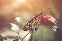 Motyl w naturze Płytka głębia pole z instgram o temacie Fotografia Stock