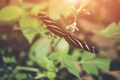 Motyl w naturze Płytka głębia pole z instgram o temacie Fotografia Royalty Free