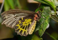 Motyl w ogródzie zdjęcie royalty free