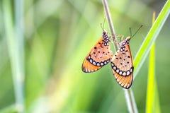 Motyl w parku Zdjęcie Royalty Free