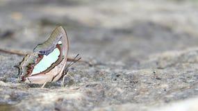 Motyl w ranek naturze Obraz Stock