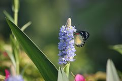 Motyl w ranku fotografia royalty free