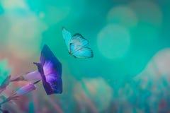 Motyl w trawie na łące przy nocą w olśniewającym blask księżyca na naturze w błękicie i purpurowych brzmieniach makro-, Bajecznie obraz stock