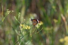 Motyl w ziemianin zieleni Fotografia Stock