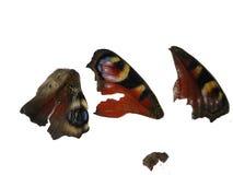 Motyl z łamanymi puszków skrzydłami Obraz Stock
