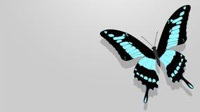 Motyl z czerni skrzydłami, błękitów wzory ilustracja wektor