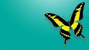 Motyl z czerni skrzydłami, kolorów żółtych wzory ilustracja wektor