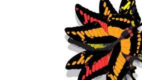 Motyl z czerni skrzydłami, pomarańcze wzory ilustracja wektor