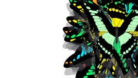 Motyl z czerni skrzydłami, zieleń wzory ilustracji