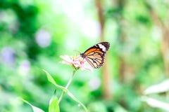 Motyl z kwiatem Zdjęcia Royalty Free