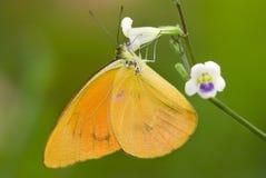 Motyl z naturalnym tłem Zdjęcie Royalty Free