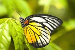 Motyl z naturalnym tłem Zdjęcie Stock