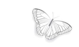 Motyl z otwartymi skrzydłami Zdjęcia Royalty Free