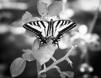 Motyl Zamknięty Up na liściach Outdoors w naturze obraz stock