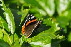 Motyl zamknięty w górę zielonego liścia dalej fotografia royalty free