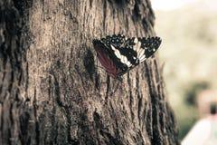 Motyl zamknięty Zdjęcie Royalty Free