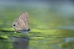 Motyl zatrzymujący przy mokrą wodą gruntową zdjęcia royalty free