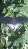 Motyla dom Obrazy Royalty Free