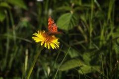 Motyla dom Obrazy Stock